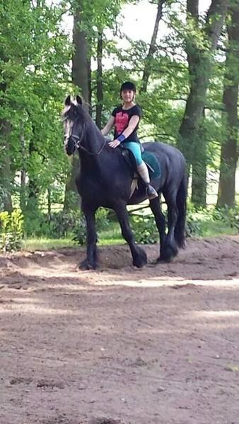 tierheim für pferde